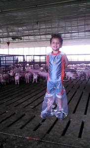 Hayden Pigs