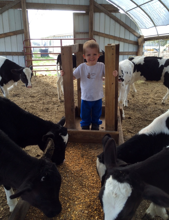 The youngest of the seventh-generation Hansens is three-year-old Beckett, son of Blake and Jordan Hansen, who enjoys helping Daddy feed the heifers.