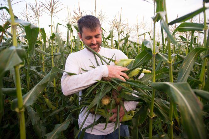 Sweet corn cory