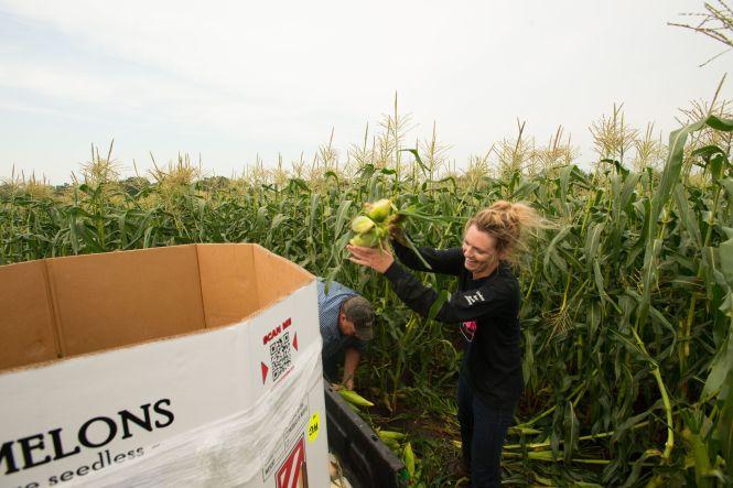 Sweet Corn Lindsey F