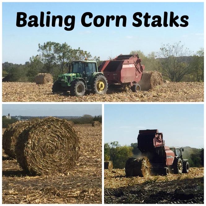 Baling Corn Stalks 15