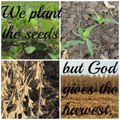 Planting and Harvest
