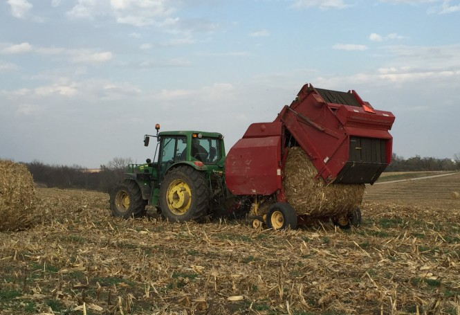 Corn stalk bales 3