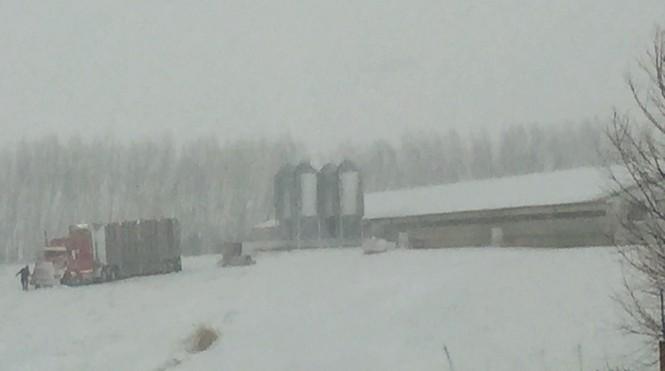 PIg Loading Snow (2)