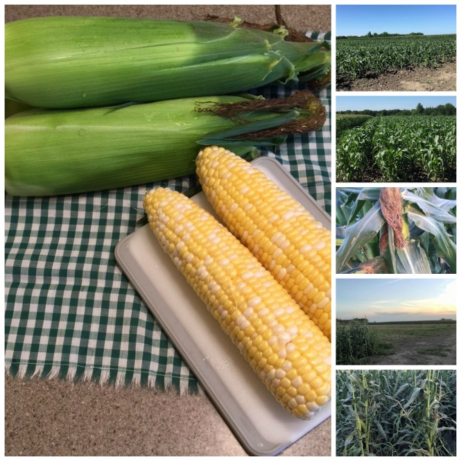 Sweet Corn June July16