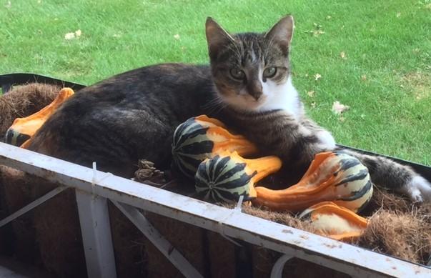 kitten-fall