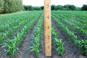 Corn53018