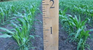 Corn530182